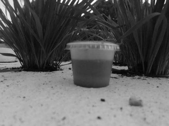 Wheat Grass shot, photo shoot among the grass...