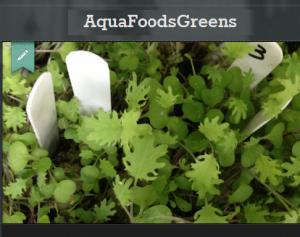 AquaFoodsGreens