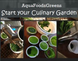 Start-You-Culinary-Garden (1)
