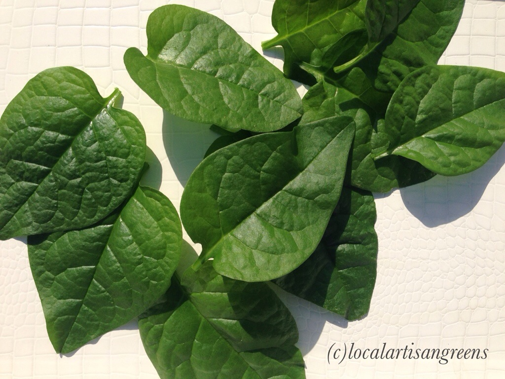 Freshly picked Malabar Spinach leaves