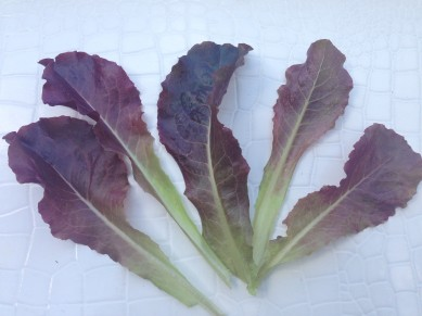 Gourmet Lettuce Mix Red Romaine 2
